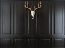 Cráneo de los ciervos con los cuernos Fotografía de archivo libre de regalías