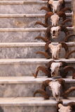 Cráneos en las escaleras Imagen de archivo libre de regalías