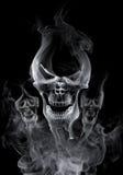 Crânio Fotos de Stock