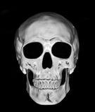 Crânio branco Foto de Stock Royalty Free