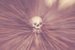 Crânio nas madeiras Imagens de Stock