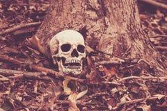 Crânio nas madeiras Imagem de Stock