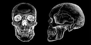 Crânios do vetor de Grunge Fotos de Stock Royalty Free