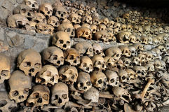 Crânios e ossos Imagens de Stock