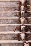 Crânios em escadas Imagem de Stock Royalty Free