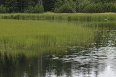 Crno jezero - Pohorje的,斯洛文尼亚黑湖 库存照片