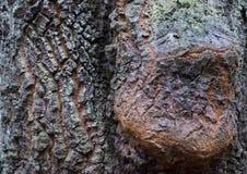 Croûte de l'arbre images libres de droits