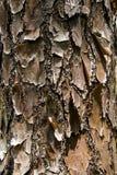 Croûte de tronc d'arbre Photographie stock libre de droits