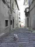 Croacia, Motovun Montona, 6 Fotos de archivo