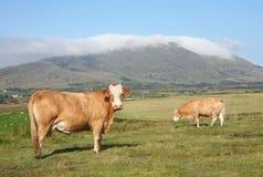 croagh Ιρλανδία mayo Πάτρικ Στοκ Εικόνες