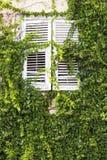 croatia gammala fönster Arkivbilder