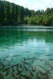 croatia lake Royaltyfria Bilder