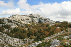 Croatia / Mountains / Colorful Vegetation And Rocks Royalty Free Stock Image