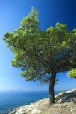 Croatia - Murter island Stock Photography