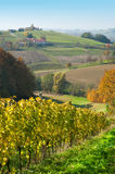 croatia obszarów trawiasty wzgórzy robaje wineyards Zdjęcia Royalty Free