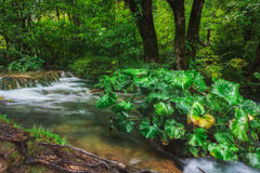 Croatia. Plitvice Lakes. Forest stream with green plants. Stock Images