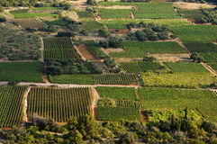 Croatia - Vineyards Royalty Free Stock Photos