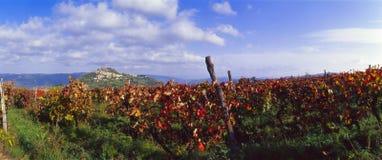 Croatia - vinhedos em Motovun foto de stock royalty free