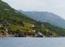 Croatian agriculture on the peninsula Peljesac Royalty Free Stock Images