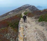 Croatian donkey. Walking along the pathway. Palagruža, island of Croatia stock image