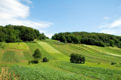 Croatian Farm 1. Fields in croatia (hrvatska Royalty Free Stock Images