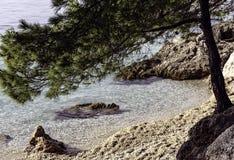 Croatian pine tree with Adriatic Sea in background - Brela, Makarska Riviera, Dalmatia, Croatia Stock Image