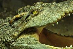 Croc Royalty Free Stock Photos