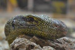 Croc Fotografering för Bildbyråer