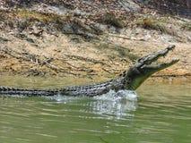 Croc-Angriff Stockbild