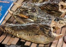 Croc head. A lot of Crocodile heads Stock Image