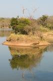 Croc-Insel Stockfotografie
