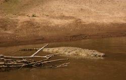 croc mara Fotografering för Bildbyråer