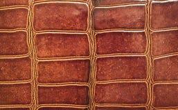 Croc pelt Stock Images