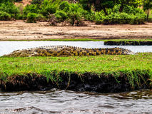 Croc by the river Stock Image
