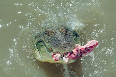 crocbanhoppning Royaltyfria Bilder