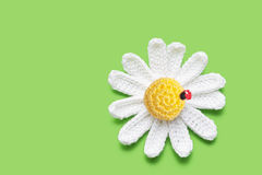 Crochet daisy Royalty Free Stock Image