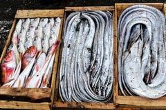 Crochet frais de la nuit - poisson dans des boîtes en bois image stock