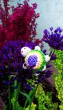 A crochet turtle on a flower stock image