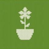 Crocheted flower Stock Images