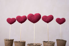 Crocheted hearts in peat glasses Royalty Free Stock Photo