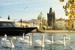 Crociera sul fiume della Moldava a Praga Fotografia Stock Libera da Diritti