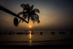 Crocked棕榈树 免版税图库摄影