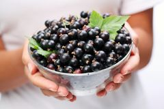 Crockery with black currant. Stock Images