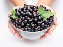 Crockery with black currant. Royalty Free Stock Photography