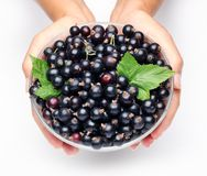 Crockery with black currant. Royalty Free Stock Image
