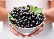Crockery with black currant. Royalty Free Stock Photo
