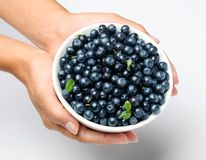 Crockery with blueberries. Stock Images