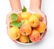 Crockery with mellow apricots. Stock Image