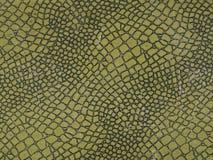 Croco, cocodrilo, fondo, verde Fotos de archivo libres de regalías