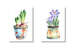 Croco e giacinto dell'acquerello dipinti 2 alte qualità Fotografia Stock
